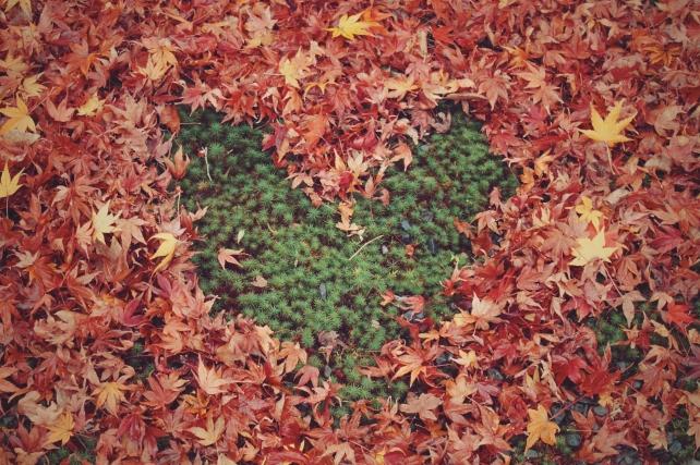 leaf_heart-%e4%b8%bb%e5%9c%96%ef%bc%89