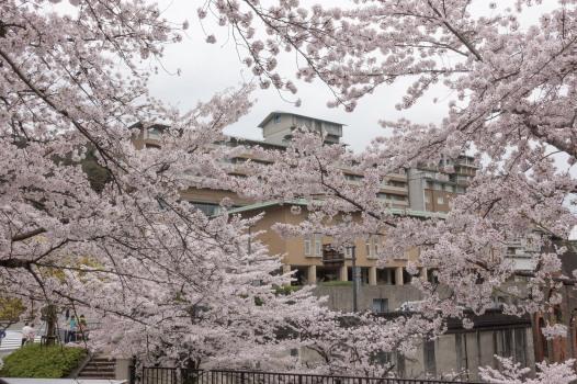 京都威斯汀_RX100_20170410_807