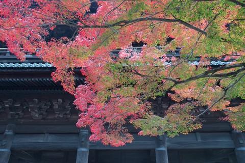 1_京都南禪寺 三門紅葉_Nikon_20161121_637.jpg