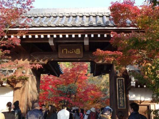 1_京都永觀堂幼稚園紅葉_DSC02881