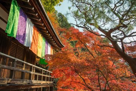 1_京都永觀堂紅葉_20131124_284